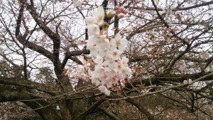 春の陽気に誘われて・・・
